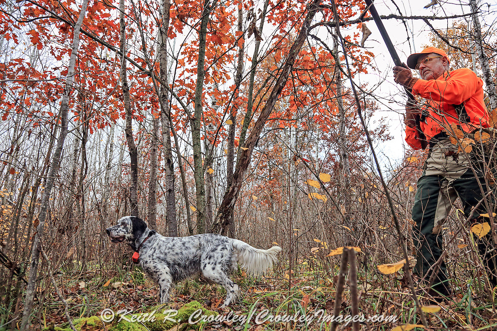 Upland hunter Dennis LaBare approaches his setter Magic during a hunt in northern Wisconsin