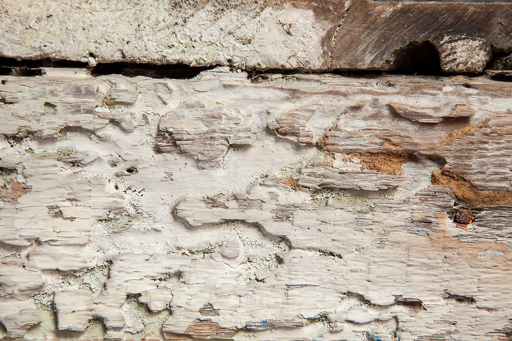 A close-up of the surface of one of the very old boards in the C-Scape dune shack.