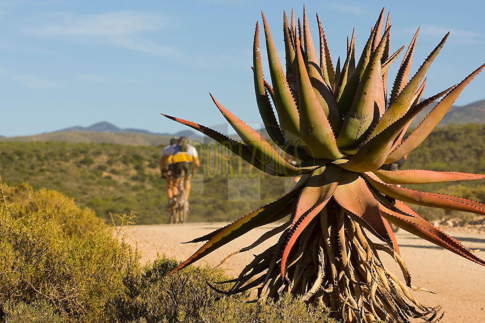 WESTERN CAPE, SOUTH AFRICA -  31 March 2008, local flora during stage three of the 2008 Absa Cape Epic Mountain Bike stage race from Calitzdorp Spa.to Langenhoven High School in Riversdale, Western Cape, South Africa..Photo by Sven Martin/SPORTZPICS