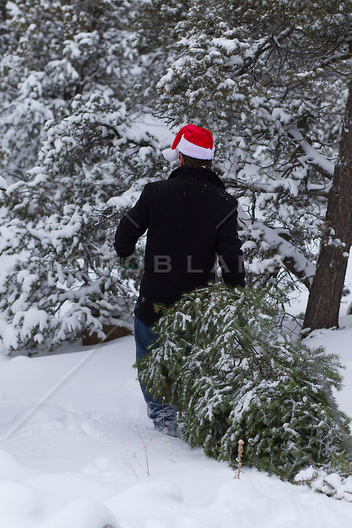 man in a Christmas santa  hat pulling a Christmas tree in the snow