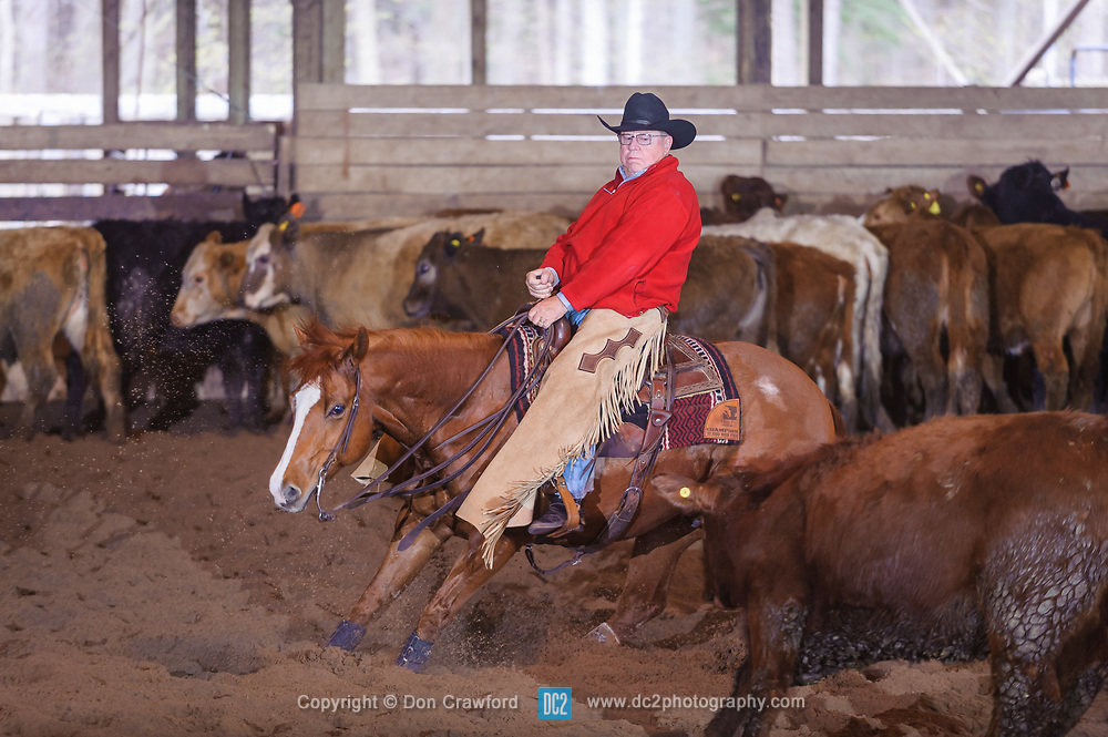 April 30 2017 - Minshall Farm Cutting 2, held at Minshall Farms, Hillsburgh Ontario. The event was put on by the Ontario Cutting Horse Association. Riding in the 25,000 Novice Horse Non-Pro Class is John Koop on Head Cat owned by the rider.