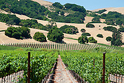 A grape vineyard stretches out before the camera.