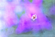 Tiny white and orange blossom center in triangle flower in horizontal field of purples soft greens and blues, tiny white flower sits centered vertically slightly right of center, color washed background, flower art, feminine, iridescent, high resolution, licensing, 5616 x 3744