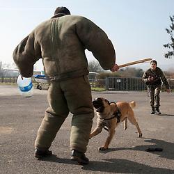 Entrainement des équipes cynophiles de la Gendarmerie Nationale en Ile de France.<br /> mars 2012 / Domont / Val d'Oise (95) / FRANCE<br /> Cliquez ci-dessous pour voir le reportage complet (80 photos) en accès réservé<br /> http://sandrachenugodefroy.photoshelter.com/gallery/2012-03-Entrainement-des-equipes-cynophiles-gendarmerie-Complet/G0000vuDan46sRx4/C0000yuz5WpdBLSQ