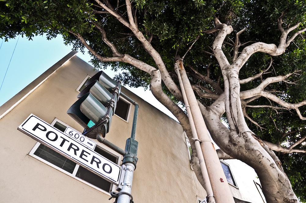 Potrero tree