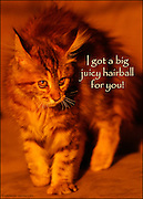 Funny Cat Greeting Card. © Colin E Braley