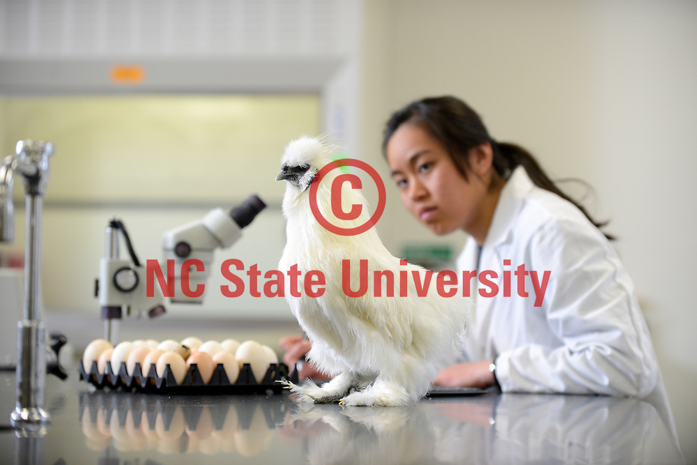 A student works with a chicken in a Williams Hall lab. Photo by Marc Hall