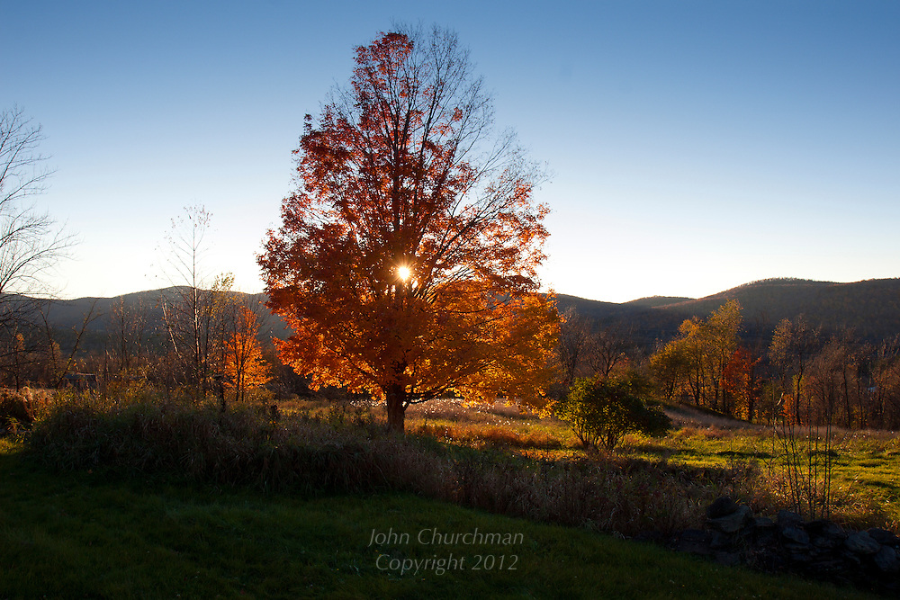 Maple tree with sunset, Underhill, Vermont