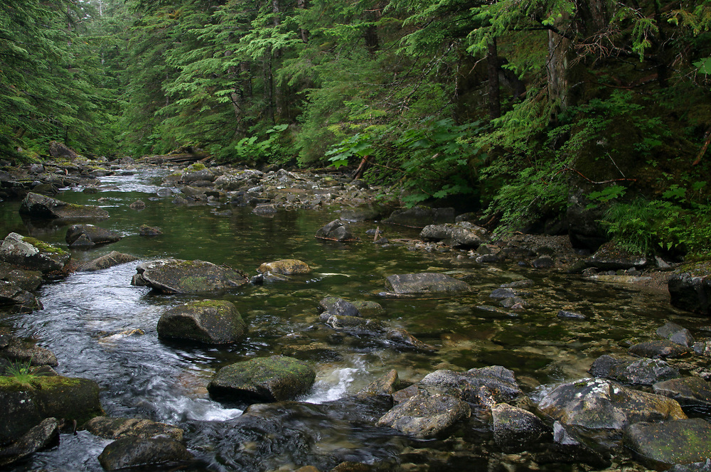 A gentle stream flows through the rich, green rainforest of this remote wilderness area.