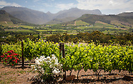 Vineyards and landscape in the Franschhoek Valley, South Africa. http://www.gettyimages.com/detail/photo/vineyards-franschhoek-south-africa-royalty-free-image/97936127