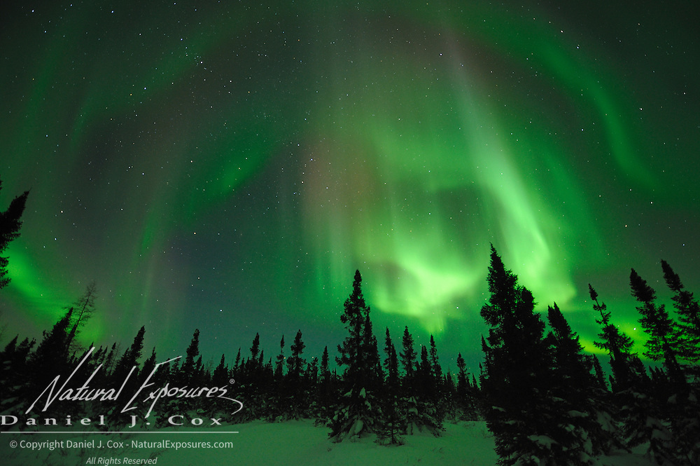 Aurora Borealis, also known as Northern Lights, in the sky above Wapusk National Park. Manitoba, Canada