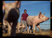 Charlie Theiriot is the owner and brand manager of Rancho Llano Seco, a producer of organic pork, heirloom beans and other agricultural products. The ranch is located near Chico, California.