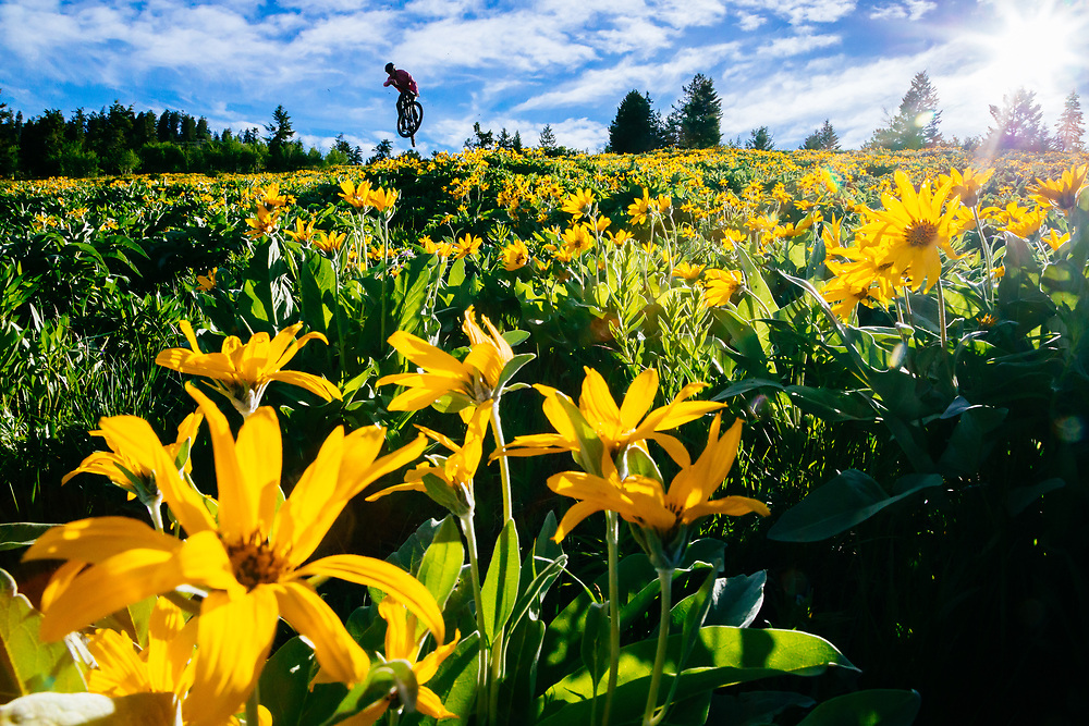 Malachi Artise gets air in the arrowleaf balsamroot in the Tetons.