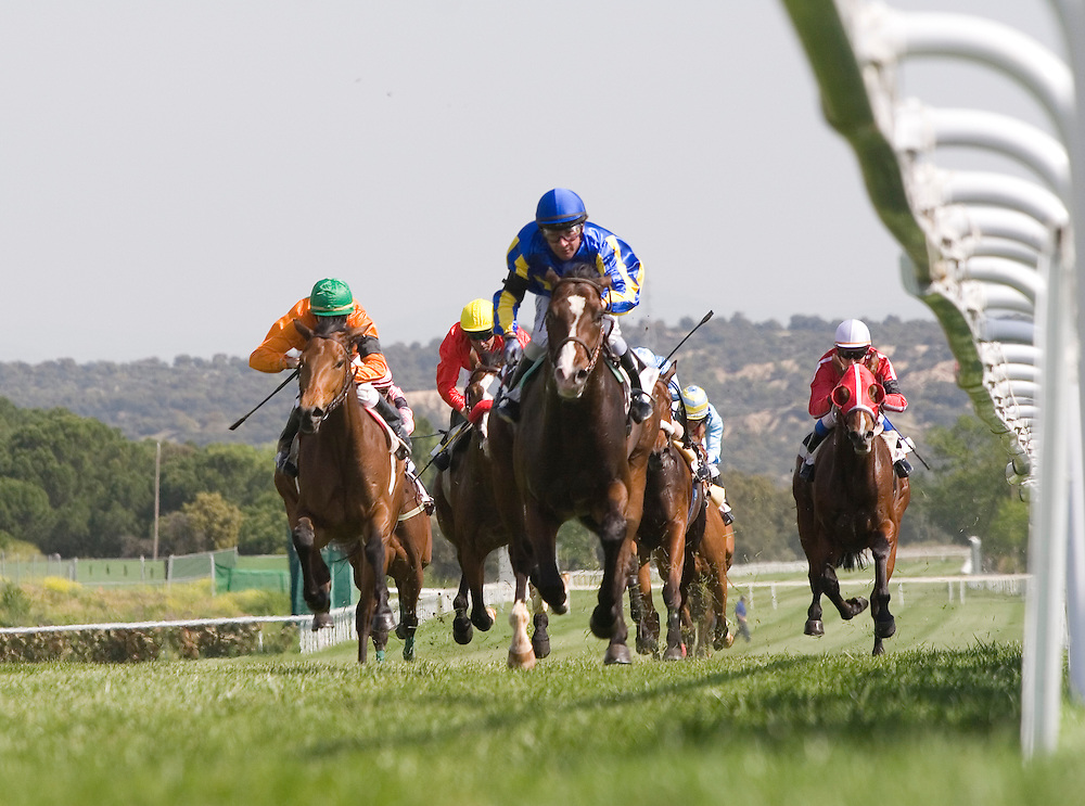 Horse racing at Zarzuela Hippodrome in Madrid (Spain).<br /> <br /> Carrera de caballos en el Hip&oacute;dromo de la Zarzuela de Madrid (Espa&ntilde;a).