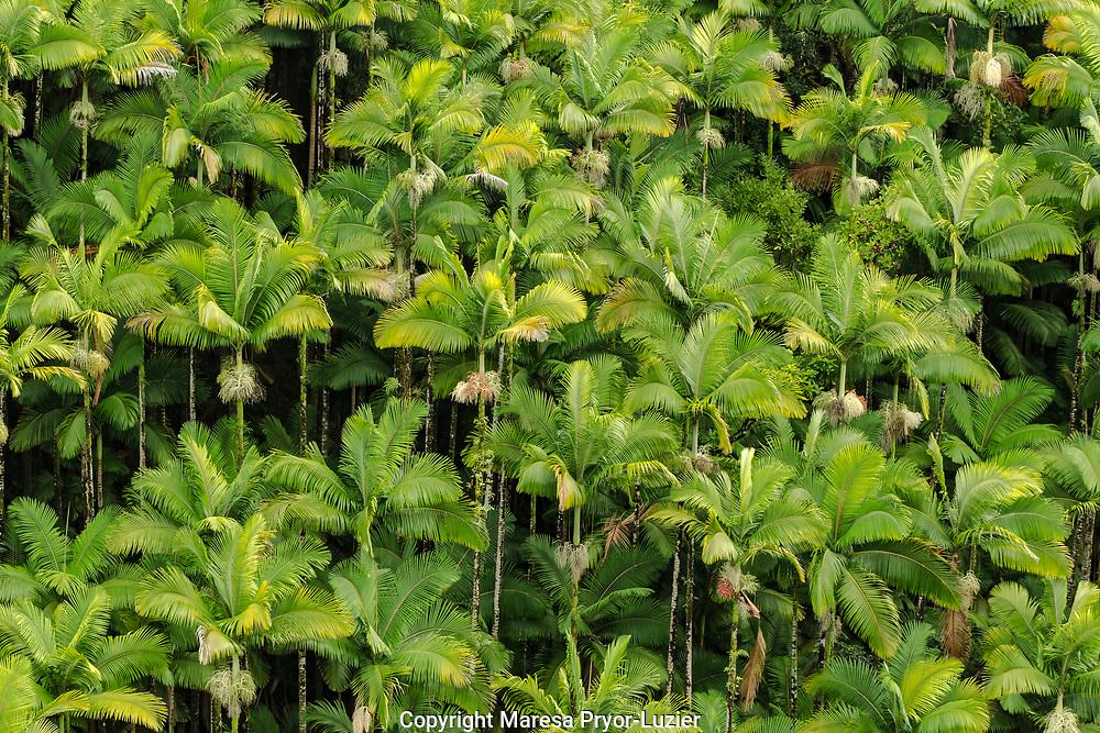 Hawaiian flora and fauna from the Nanue Bridge, Hamakua coast, Big Island, Hawaii
