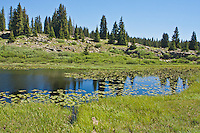 One of many small lakes or ponds with lily pads found on the Grand Mesa,  Colorado.
