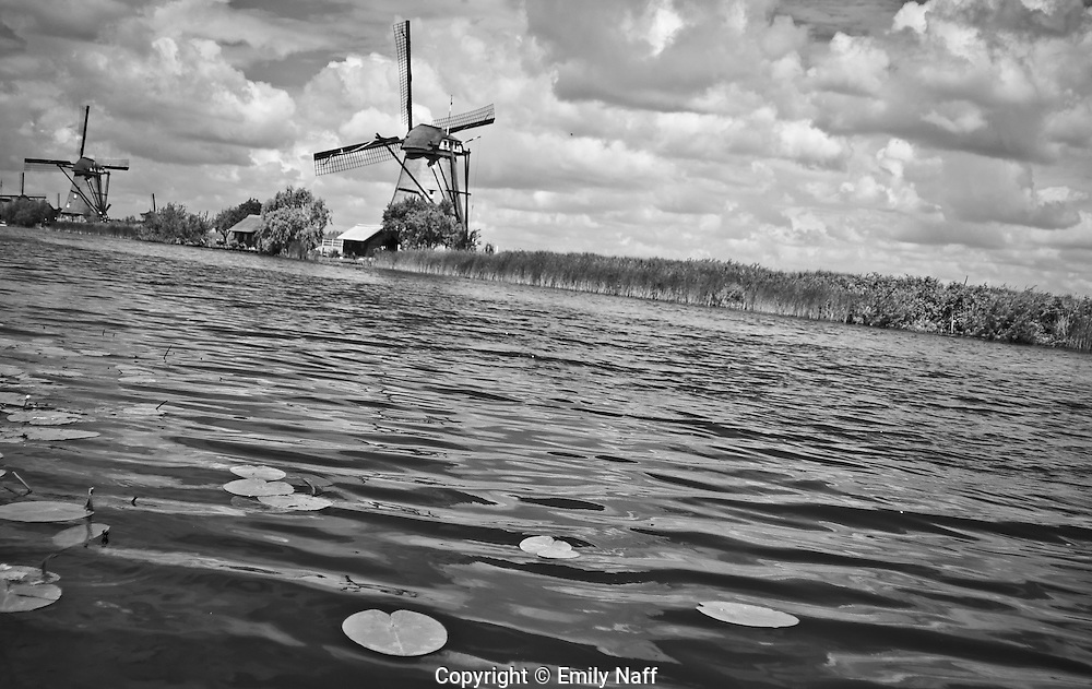 View of lily pads and windmills in Kinderdijk, Netherlands