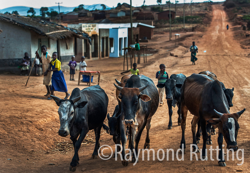 Malawi- traditional Village in  Ntchisi Forest Reserve . Ntchisi Forest Reserve covers approximately 75 sqkm and is surrounded on all sides by rolling hills covered by subsistence farming and dotted with traditional villages. photo ©raymond rutting