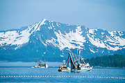 Alaska. Prince William Sound. Commercial fishing boats seining and  fishing for Sockeye Salmon with snowy mountains in back.