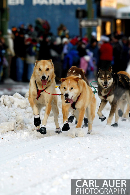 3/3/2007:  Anchorage Alaska -  The 35th Iditarod Sled Dog Race starts as the dogs from the team of Veteran Perry Solmonson of Plain, WA head down 4th Avenue
