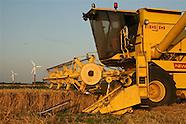 Graanoogst in Nederland - Grain Harvest in the Netherlands