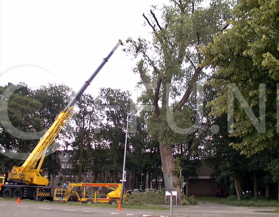 Fotografie Frank Uijlenbroek©1999/Frank Uijlenbroek.990623 slagharen ned.oude eik wordt geveld voor de deur van ACZ dde Eik.de boom wordt stuk voor stuk ontmanteld..
