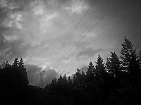 a high voltage transmission line in a silhouetted conifer forest in gritty grainy monochrome on the Kitsap Peninsula of Washington state, USA