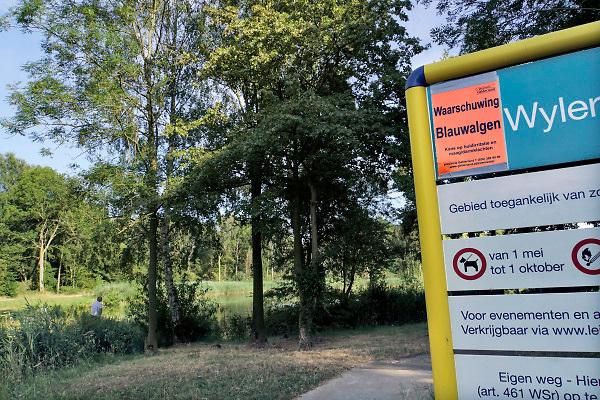 Nederland, Beek, 27-7-2018Wylerbergmeer heeft Blauwalg. Ondanks zwemverbod zijn er toch mensen in het water Foto: Flip Franssen