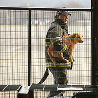 March 9, 2012 - London, Kentucky, USA - Brandon Zacharias, a member of the East Bernstadt Fire Department, brings into The Humane Society of the United States emergency animal shelter a dog he found in the aftermath of tornados that tore through East Bernstadt and areas around London, Ky. The emergency animal shelter is operated out of an airplane hangar at the London-Corbin Airport. (Credit image: © David Stephenson/The Humane Society of the United States/ZUMA Press)