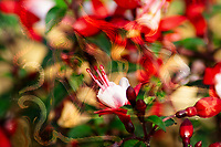 spiritual beyond the visible: abstract art composition with flowers on foreground and human figure on blurred background in dominant red,green and beige tones