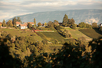 wine harvest in Switzerland