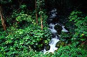 Waihole Stream, Kaneohe, Oahu, Hawaii<br />