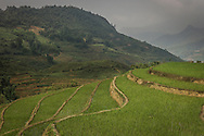 Green terraced rice fields cover the mountainous landscape, Sapa area, Lao Cai Province, Vietnam, Southeast Asia