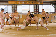 Wrestlers of the Professional Sumo Team (Musahigawa Beya) tussle in the center of the ring in Nagoya, Japan as Miyabiyama, the premier fighter of the stable, watches.