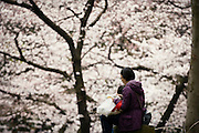 A woman and her son enjoy a bite to eat under the cherry blossoms at Ueno Park in Tokyo, Japan on 31 March, 2010.