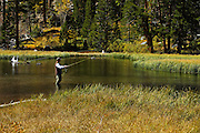 Fly Fishing in a Stream at the Eastern Sierras