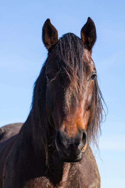 IMANHOFF CASTELLO - Holsteiner stallion