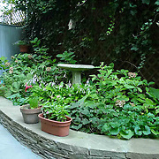 Small Shady Garden with Blue stone paving and stacked stone wall by Outside Space NYC with luxurious shade planting.