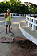 Woman drying coffee on La Farola Highway, Guantanamo, Cuba.