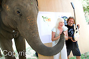 """Jaab, an elephant at the Elephant Life Experience (ELE) north of Chiang Mai celebrates during a press conference with Wendy Dio, center, former wife of legendary Black Sabbath  guitarist Ronny Dio and former Black Sabbath bassist and lyricist Terry """"Geezer"""" Butler after painting a guitar at the camp as part of a joint effort to raise funds for cancer research and elephant conservation. The elephants at the camp will paint guitars by famous musicians, which will then be sold at a New York auction house. Ronny Dio died last year from stomach cancer and so his widow Wendy is raising money in an appeal called the """"Stand Up and Shout Cancer Fund."""""""