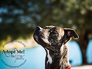 Karen is a 1 year old spayed boxer mix.