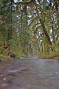 Quinault River Basin - Olympic National Park - Washington State