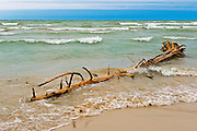 Driftwood on shore of Lake Huron<br /> Pinery Provincial Park<br /> Ontario<br /> Canada