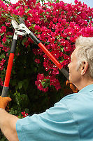 Man pruning flowers in garden