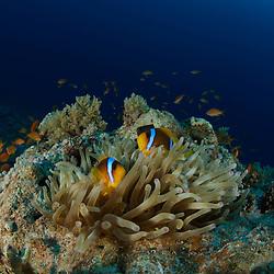 Dive Spot: Panorama Reef
