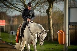 Whitaker Michael, (GBR), Flawless<br /> Jumping Mechelen 2017<br /> © Sharon Vandeput<br /> 28/12/17