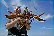 "01LineageOnline 1 of 12.CAPTION:.CREDIT: Essdras M Suarez/Globe Staff.York, Me 071807  Chef Jeremy Sewall (cq), owner of the Lineage Restaurant in Brookline checks on lobster during an outing on the ""Kelpa boat"", a 38' Young Brothers, belonging to his cousin Mark Sewall.  He threw the lobster back into the ocean since it was carrying eggs. (Essdras M Suarez/Globe staff)/ Food"