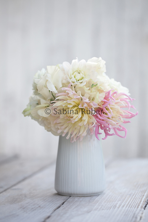 Flower arrangement with Dahlias 'Stars Favourite', 'Alfred Grille' and sweet peas in white jug