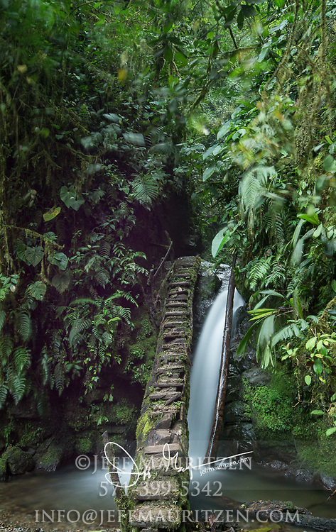 Steps lead up and over a small waterfall in the Mindo Nambillo Cloud Forest Reserve.