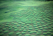 "Unusually regular mounds of earth and vegetation commonly refered to as ""mima mounds"". Their formative mechanisms continue to be a mystery to scientists. Photographed from the air in spring at The Nature Conservancy's Zumwalt Prairie Preserve. Zumwalt Prairie is the largest remaining intact tract of native bunchgrass prairie in North America."